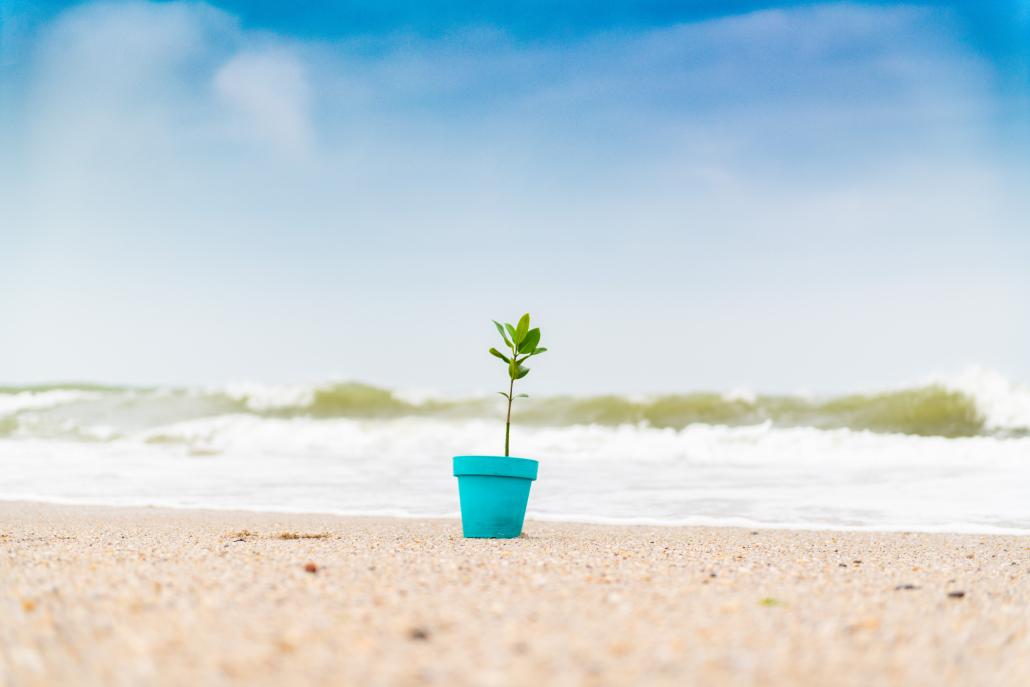 Mangroven für Klimaschutz.
