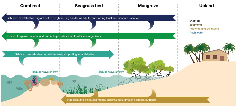 Grafik veranschaulicht die Wechselbeziehungen und markantesten Ökosystemdienstleistungen von Küstenökosystemen, u.a. von Mangroven.